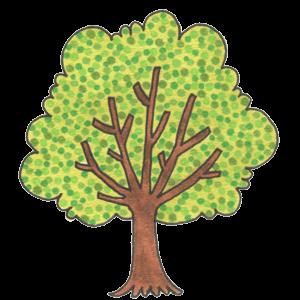ケヤキの木イラスト