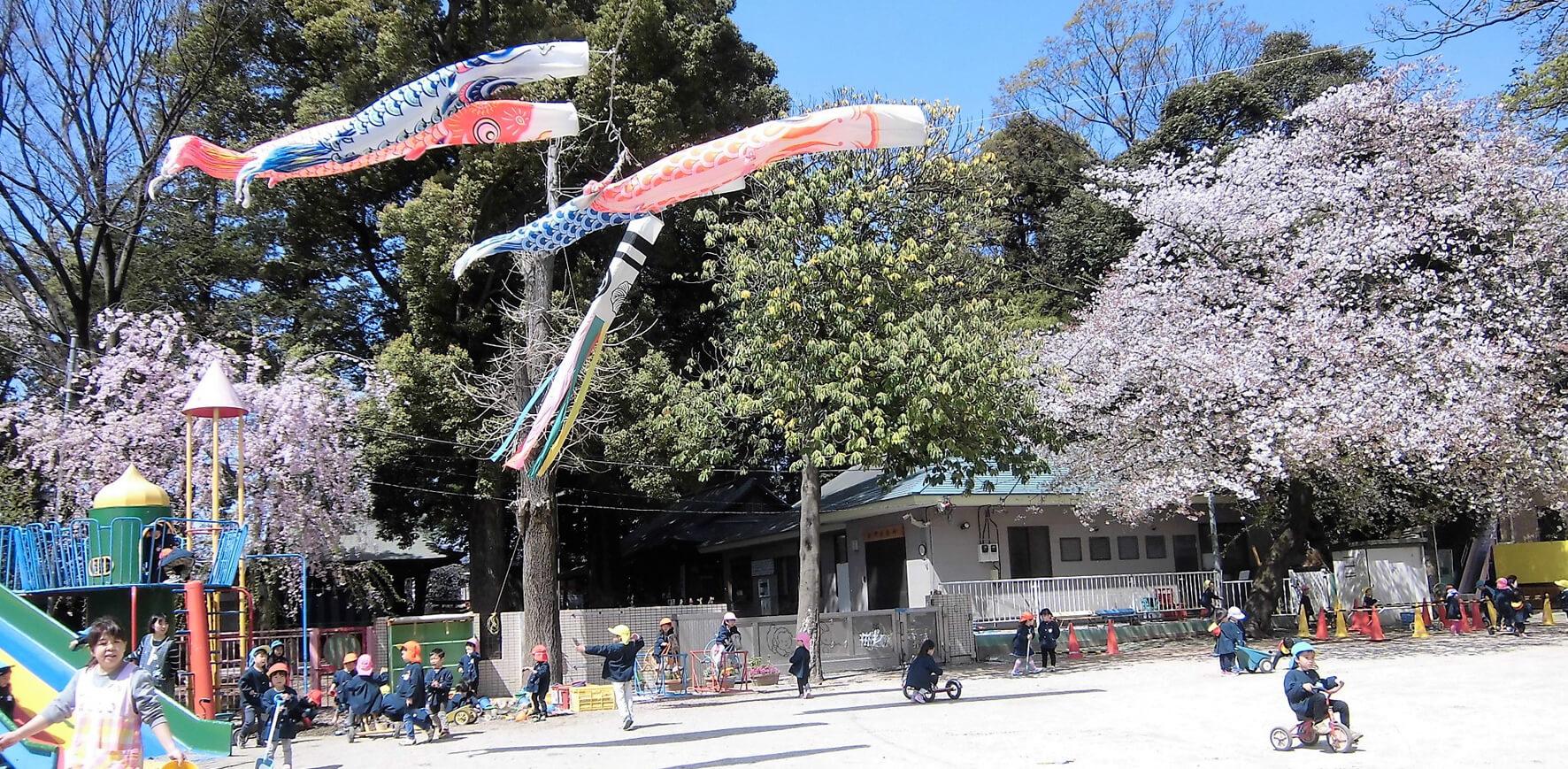 園庭の桜と鯉のぼり